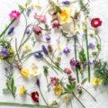 My April garden flowers