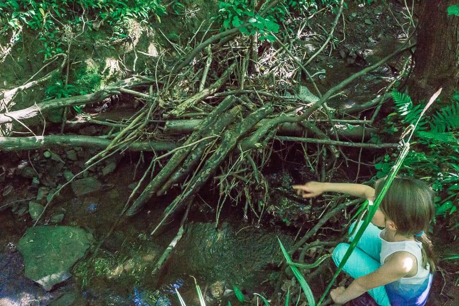 Stream adventure in woods summer