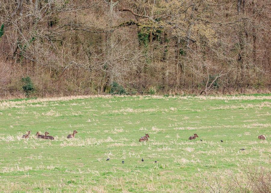 Where deer rest