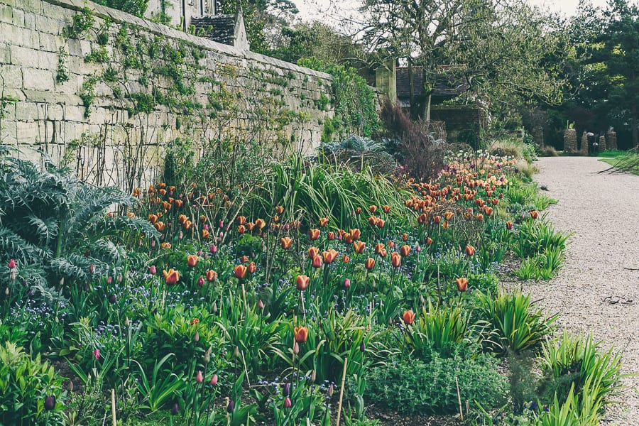 Tulip time Gravetye Manor Gardens