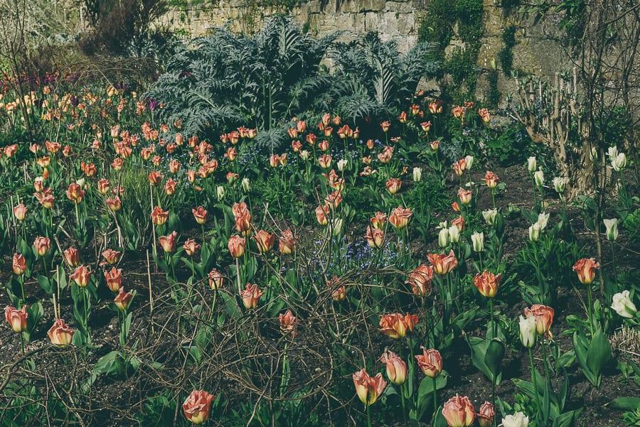 Tulip time April May