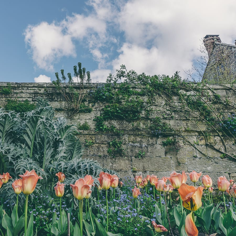 Tulips wall and sky Gravetye Manor