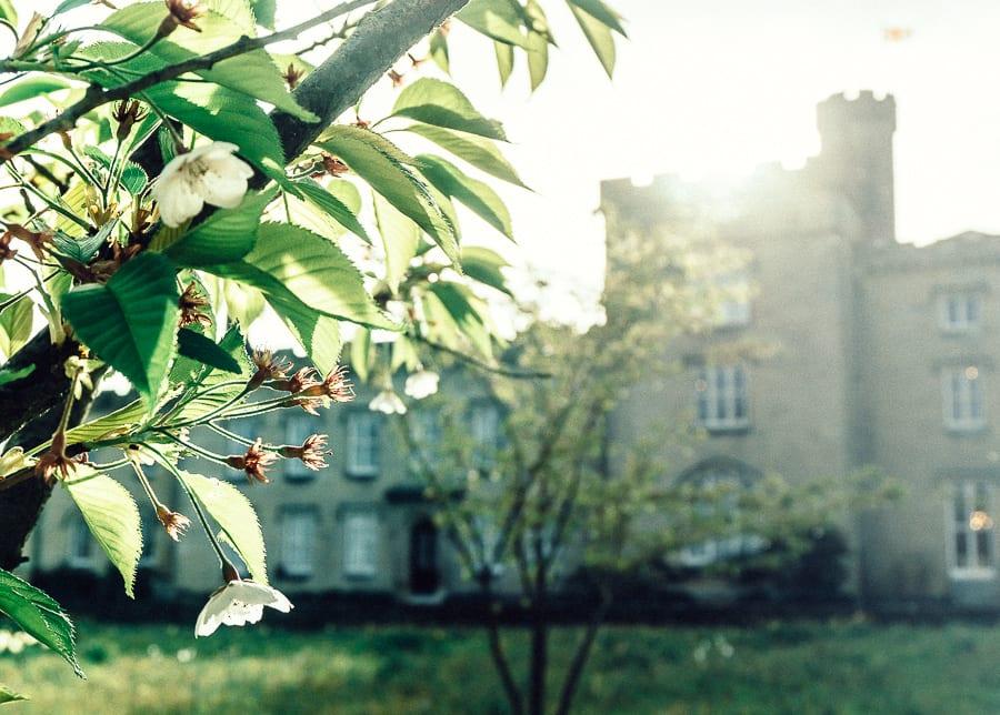 Chiddingstone Castle blossoms