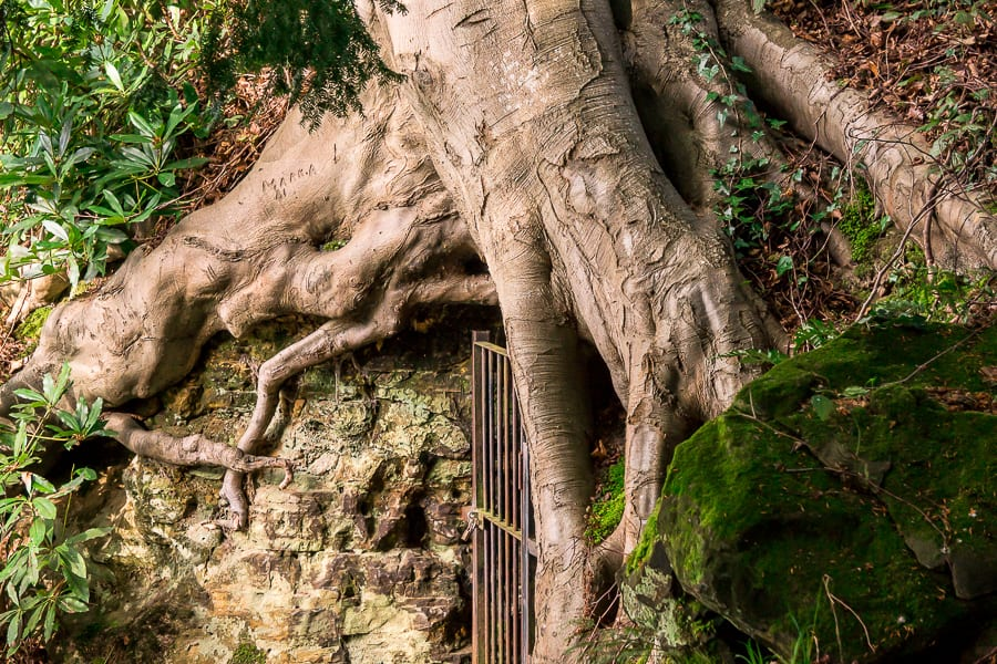 Chiddingstone Castle tree tomb roots