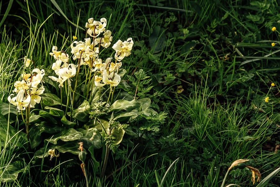 Chiddingstone Castle white flower cluster