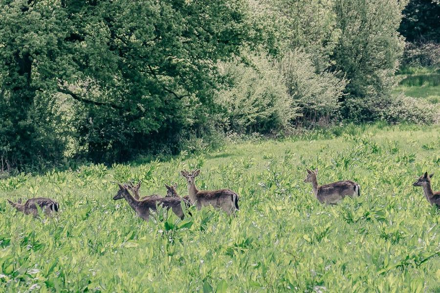 A deer view