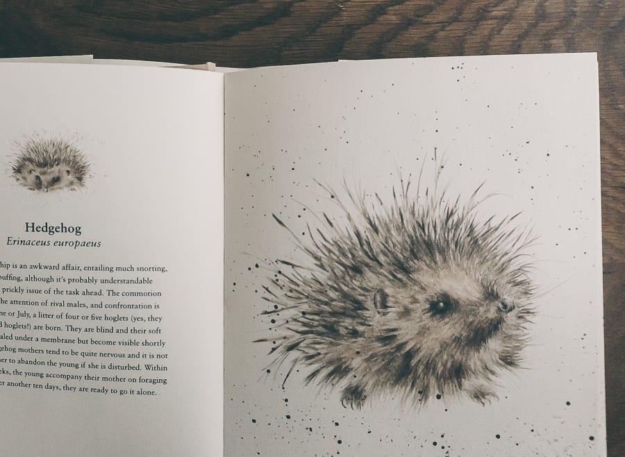 Flying the nest Hedgehog