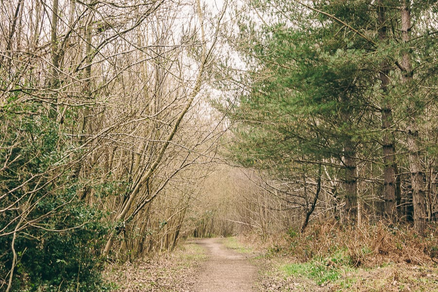 Wood path in March