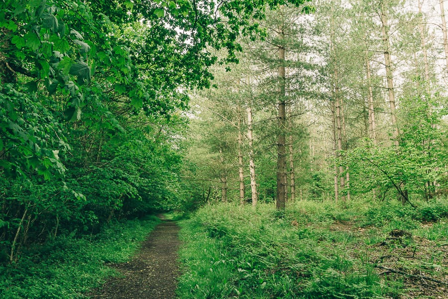 Wood path in May