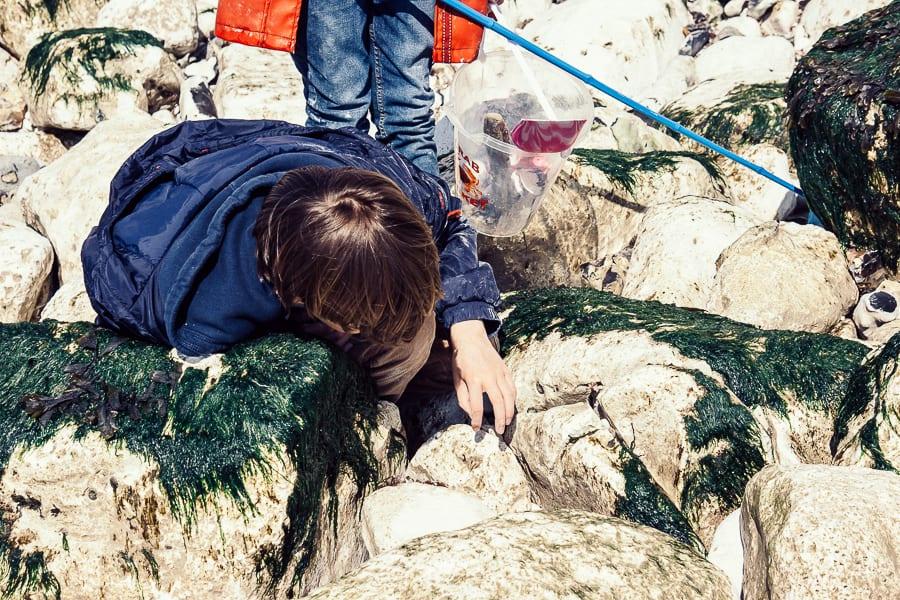 Rock pooling nets buckets rocks
