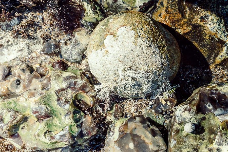 Rock pooling rocks and sea life