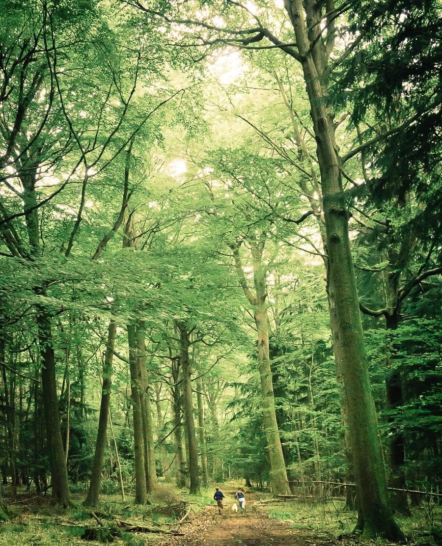 Wild kids dog woods