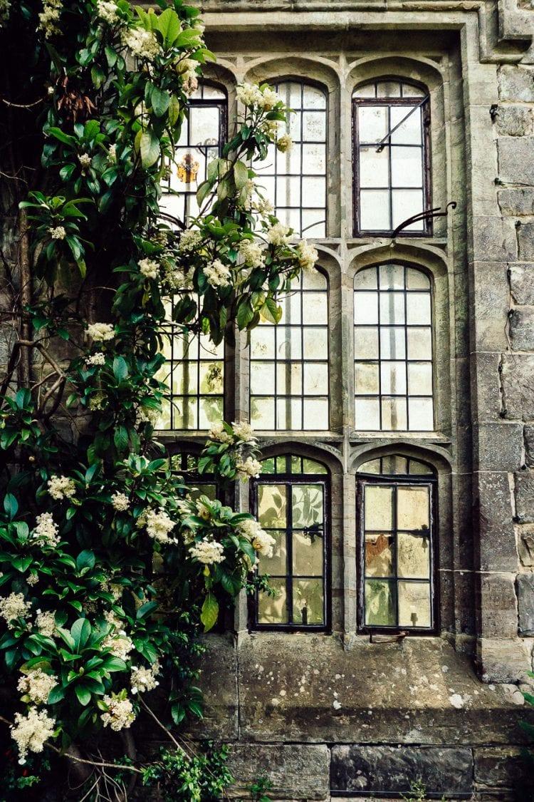 Nymans ruins window hydrangea