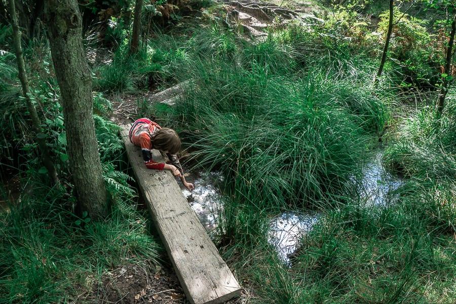 Stream in Ashdown Forest