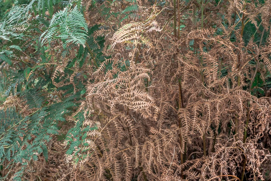 Ferns green and copper