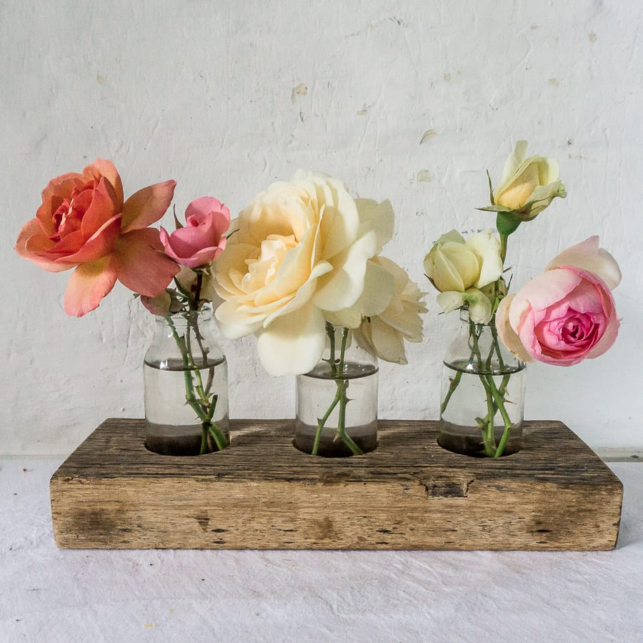 Flowering rose buds