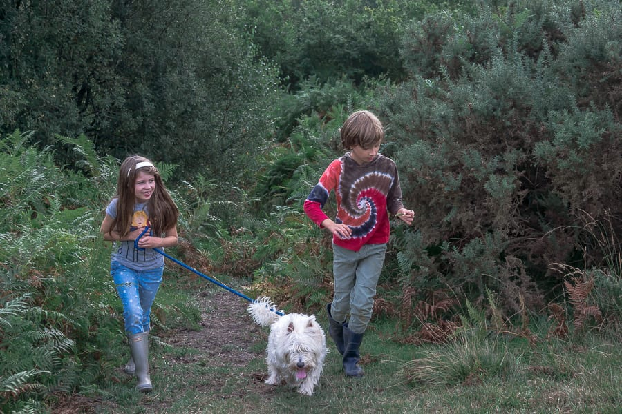 Kids and dog running on path