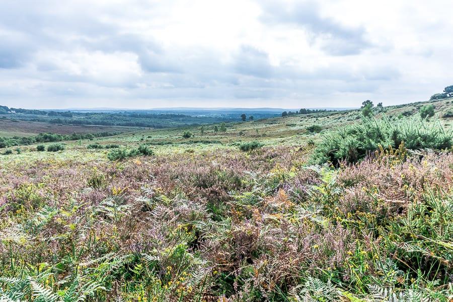 Misbourne Valley heathland Ashdown Forest
