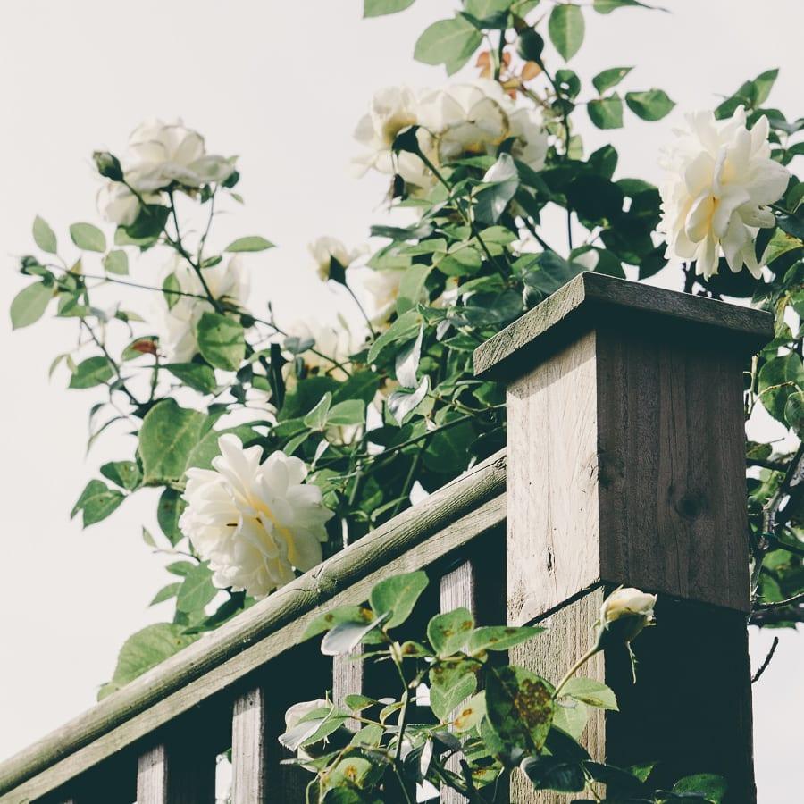 Rose climber steps
