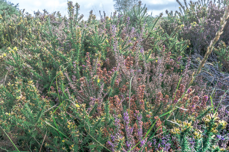 A heathland valley rarer than a rainforest