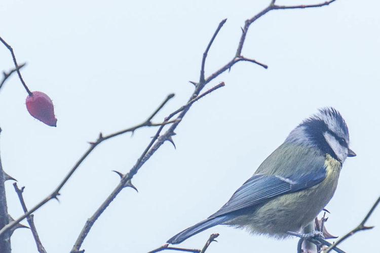 The secret lives of our winter garden birds