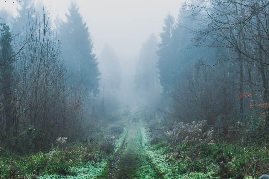 Wild flower path in Winter – January