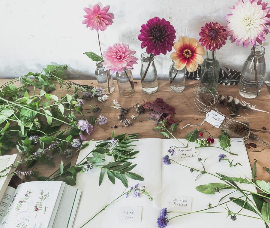 Botanical desk dahlias wild flowers September