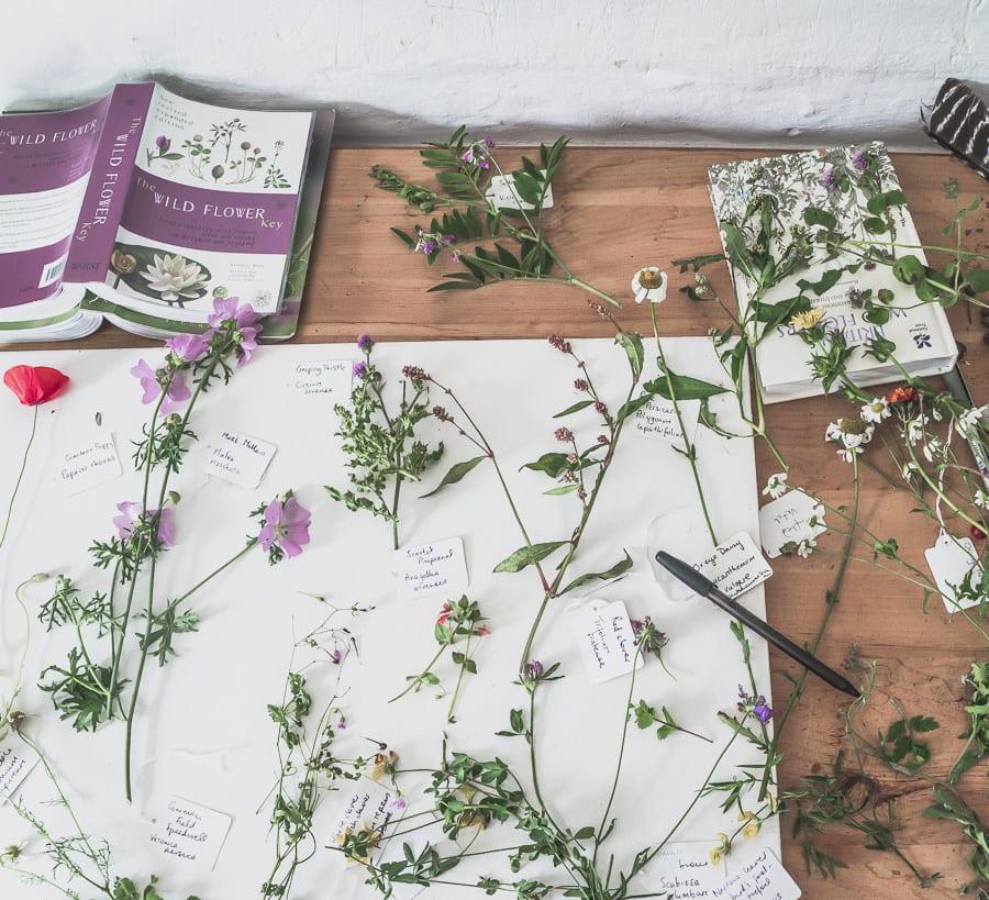 Botanical desk wild flowers September