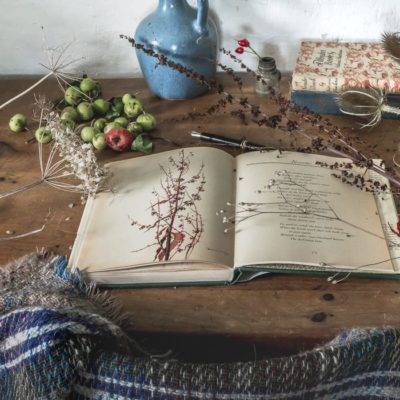 My botanical desk – Autumn nature diary