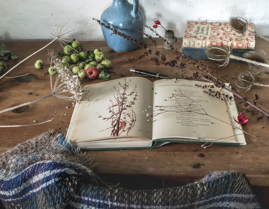 Botanical desk November Edith Holden