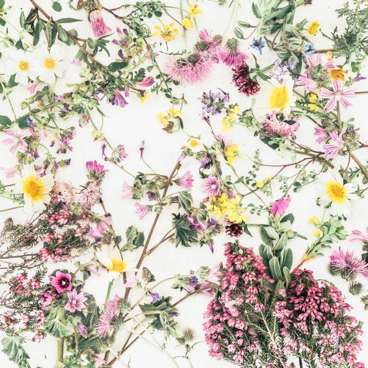 Wild free spontaneous Algarve wild flowers