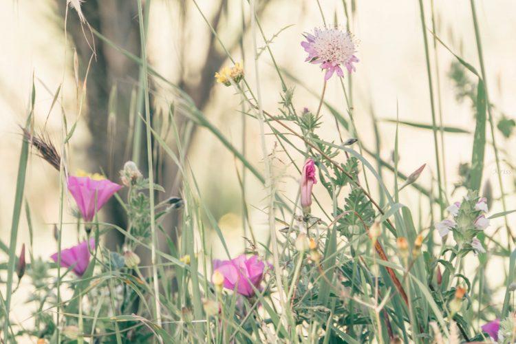 Pink border wild flowers