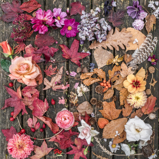 Autumn Botanical Photography Sussex