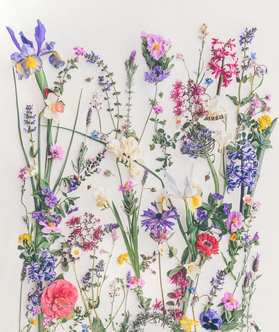 Iris wild garden