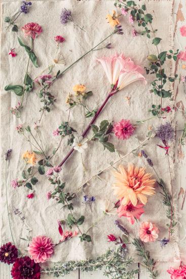 Amaryllis belladona flowers linen