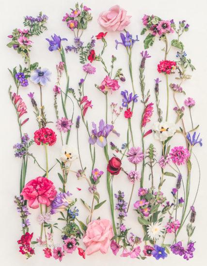 Weekend Algarve Garden Flowers