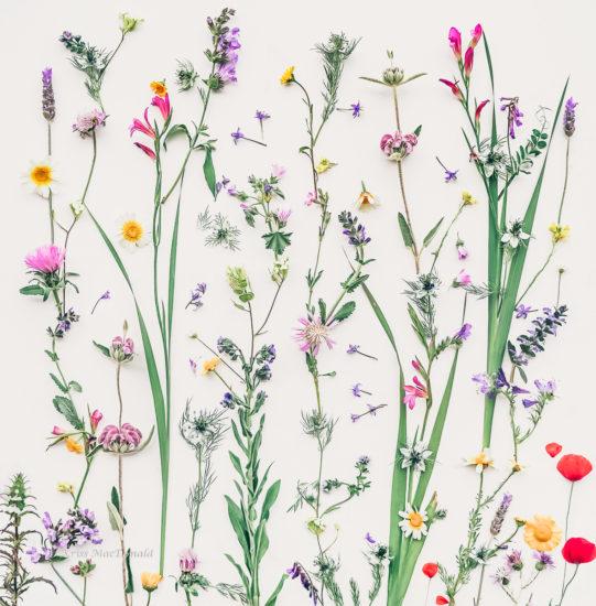 Wild Flowers Bloom Kriss MacDonald