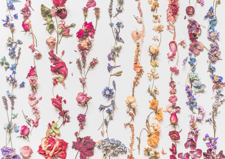 dried flowers year