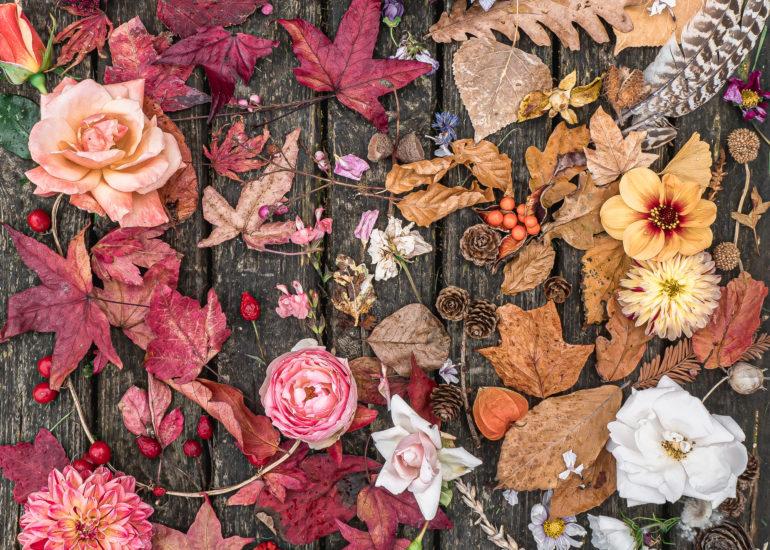 autumn leaves roses