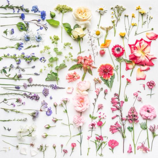 colour hues flowers botanical art