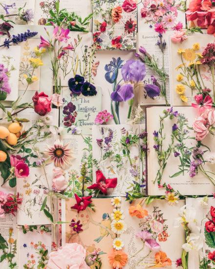 Language Flowers Books