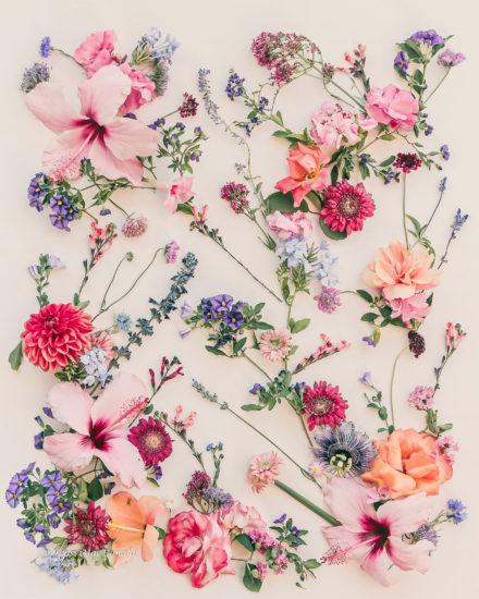 Summertime Slow Botanical Art Photo